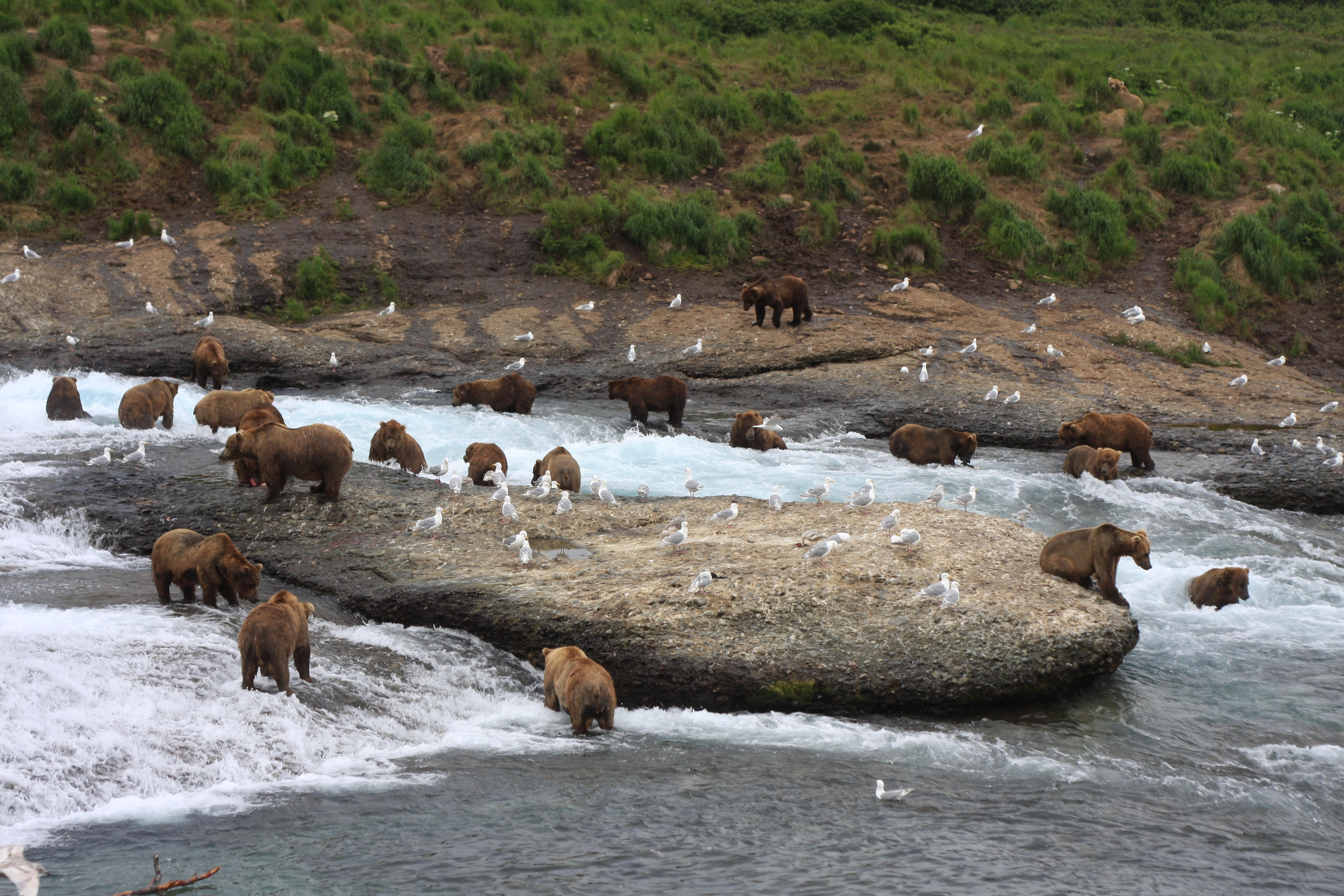 Bear Viewing is Big Business in Cook Inlet.  But Don't Ask the Pebble People.