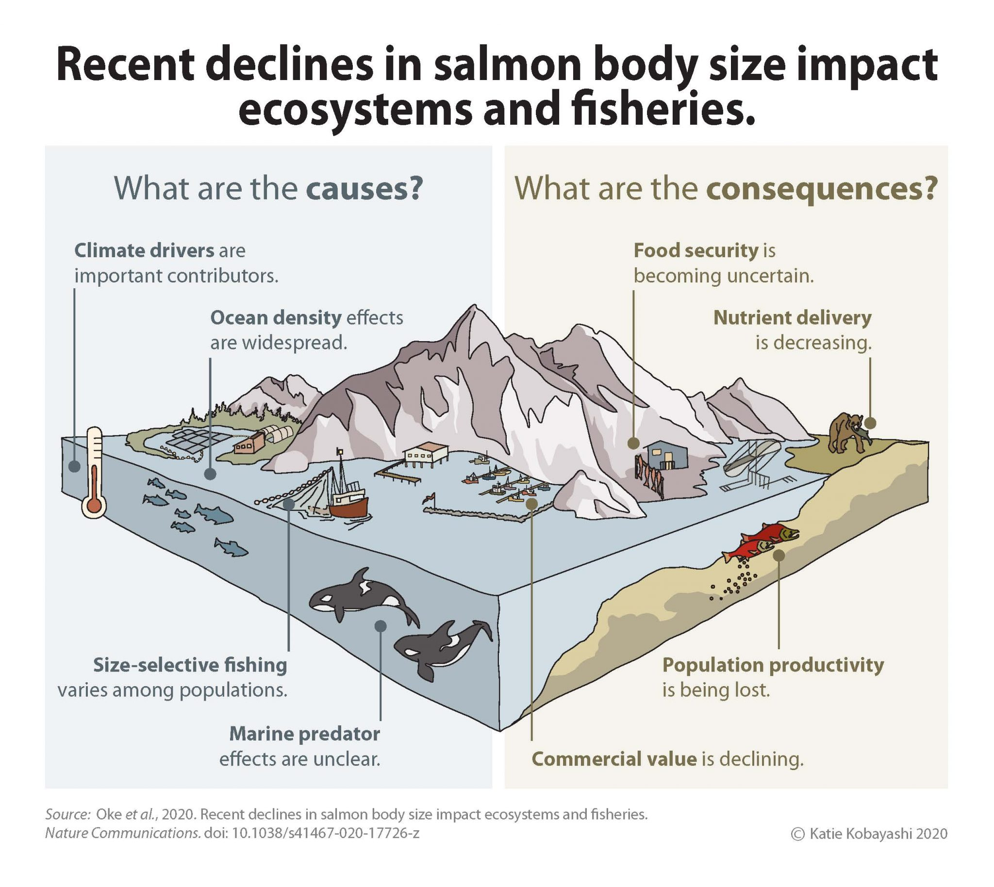 Alaska Salmon are Shrinking