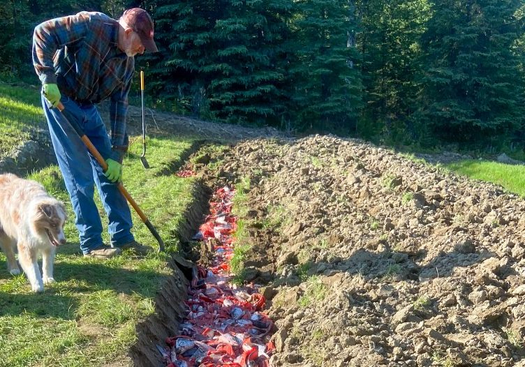 Volunteer Highlight_ The Flynns dug 30,000 lbs of salmon into the soil at their family farm this July