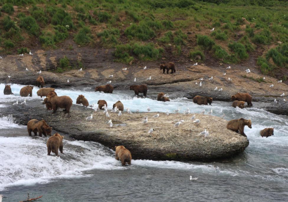 bears falls
